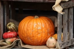 halloween forest school events around the south of england